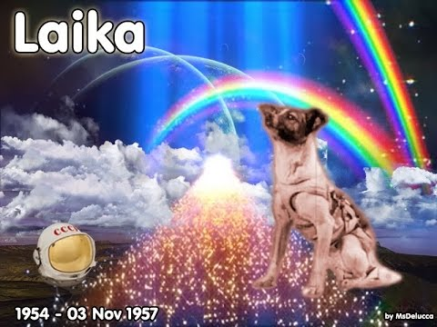 The Sad Story Of Laika First Dog In Space Youtube
