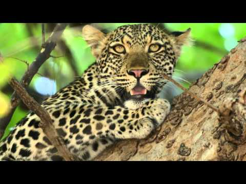 Zambia 4x4 safari 2014