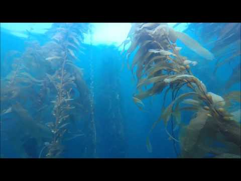 10/7/16 Santa Barbara Rookery Dive with Power Scuba