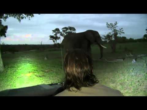 Live Stream: Safari in Djuma South Africa Kruger Nation Park 3/17/2016