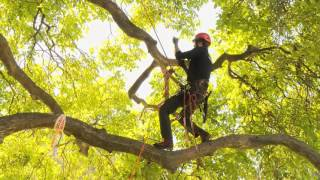 Speed Tree Climbing action at Hilux New Zealand Rural Games 2015