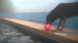 Warm Water Dog Swimming And Water Aerobics