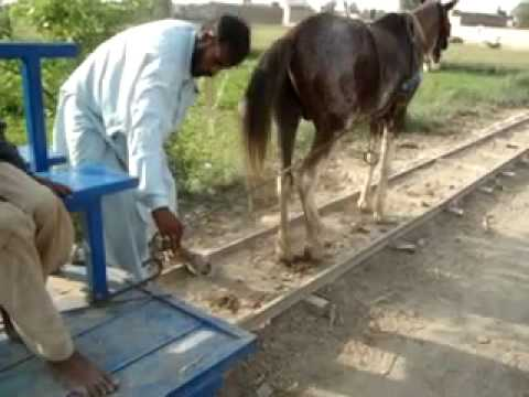 Horse Train Movie In Gangapur Village Pakistan Now on The Way Again part - 3
