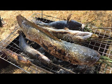 Grilled Snake Fish - Laos Food 2018