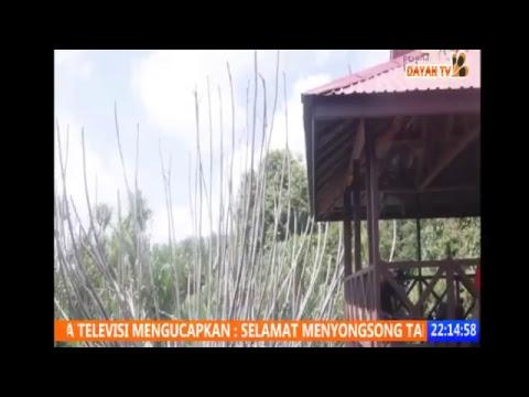 Live Streaming Dayak TV