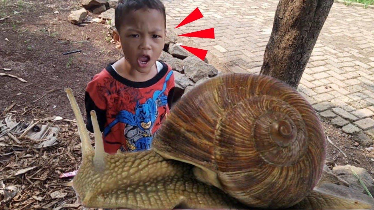 Download Abid di kejar siput NOSE‼️lagi asyik nyari belalang kikut eh malah ketemu siput nose😱