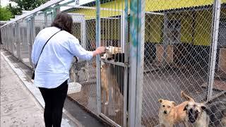 """Посещение приюта  для собак  """"Сострадание"""" в Нижнем Новгороде"""