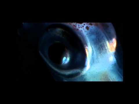 Carsten Jost - Krokus (Superpitcher Remix)