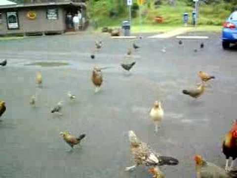 """Feeding Frenzy """"Chikens"""""""