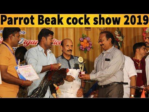 Tamilnadu Aseel Organization - TAO  Ayyalur Parrot Beak show  அய்யலூர் கிளிமூக்கு சேவல் கண்காட்சி