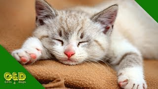 Funny Videos of June (2019) Cats and Dogs | Too Cute Funniest Pet Animals | Cat and Dog Funny Vines