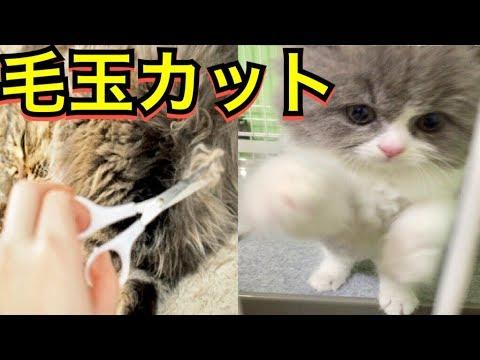 玉 猫 取り 方 毛 猫の毛が固まる!?毛玉のかたまりができる理由と対処法