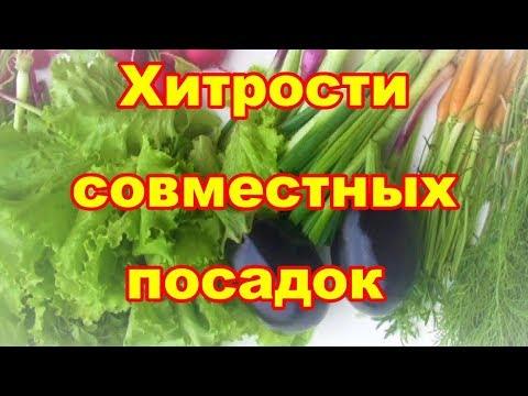 Совместные и уплотненные посадки выручат,если у вас маленький огород | уплотненные | выращивание | совместные | рвзместить | маленький | площадях | посадки | сажаем | огород | овощей