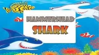 HAMMERHEAD SHARK - kids song - Lyrics Video - The Kazooks