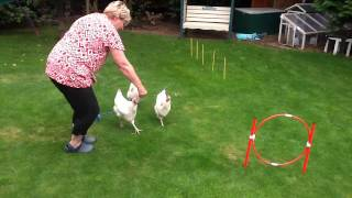 how to train your chicken