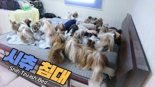 시츄가-많으면-할-수-있는-것-2-ㅣ-what-you-can-do-with-lots-of-shih-tzus-ep2-shih-tzu-ish-bed