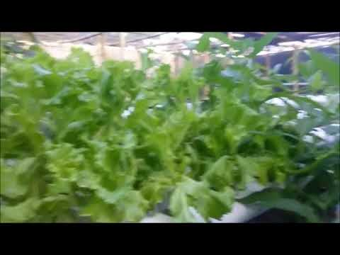 Hidroponik How To Grow Your Own Hidroponic And Aquaponic Garden