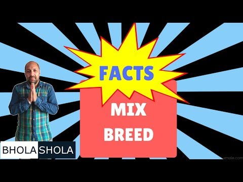 Pet Care - Facts Mix Breed  - Bhola Shola