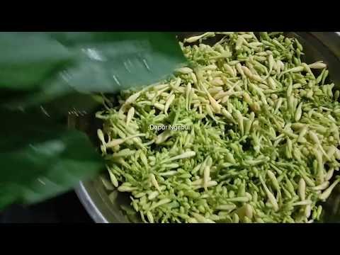 Cara mencangkok pohon Pepaya agar cepat Berakar tentunya banyak diharapkan oleh petani Pepaya baik dalam skala besar....