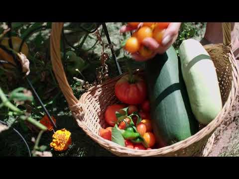 Vegetable Garden By Season