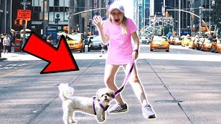 I Let My Dog Walk Me For A Day! *We Got Lost*