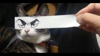 Приколы с Котами - Смешные коты и кошки 2017 -- Смешное Видео Часть 2