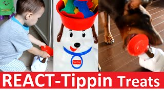 React: Doberman Attacks Tippin Treats Puppy While Toddler Watches, Cute Baby Puppy Dog Funny