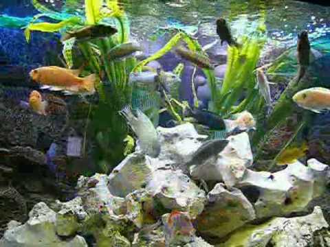 Malawi aquarium 350 liter eckaquarium youtube for Aquarium 350 litres