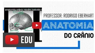 anatomia crânio recém nascido moleira - fontanela | Rodrigo Eberhart