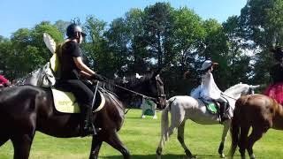 Pokaz koni w Pszczynie