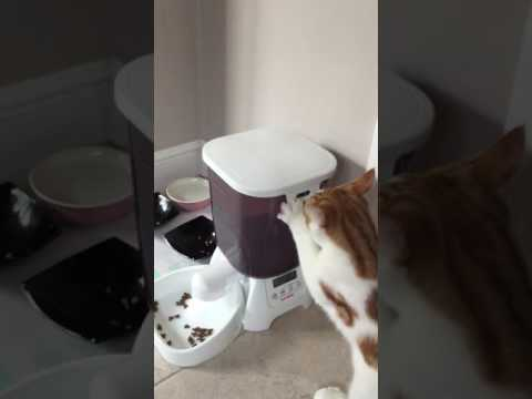 A cat's review of Cat Mate C3000 Automatic Dry Food Feeder