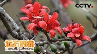 《远方的家》 20190916 长江行(28) 攀枝花:在山里 在水边| CCTV中文国际