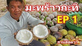 มะพร้าวกะทิ EP1 คืออะไร และ วิธีการดู ยังไง โดย สวนติดดาว จ.อุบล SuanTidDao
