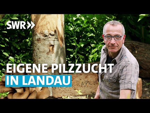 Der Pilz-Profi (4/6) | Mein leckerer Garten