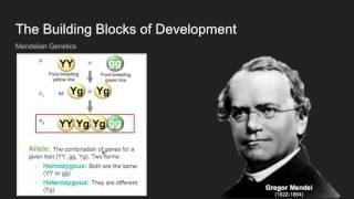 Lifespan Development   Ch  8