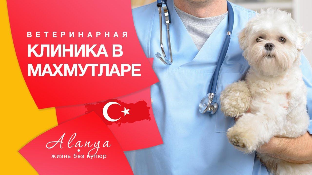 Ветклиника в Махмутларе.Содержание домашних животных в Турции.Стоимость кормов для животных Алания.