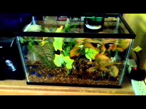 5 gallon vs 10 gallon fish tank k2 ffa07c98 3cfa 4088 for Cheap 5 gallon fish tank