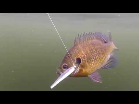 Fishing The Rideau Lakes