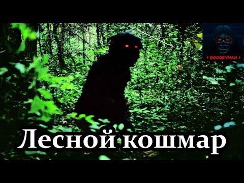 Истории на ночь: Лесной кошмар