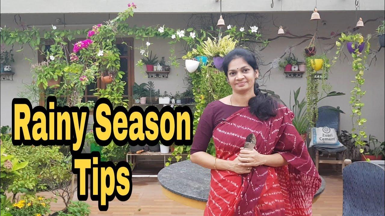 Rainy Season tips.DO'S& DON'TS./వర్షాకాలం మిద్దెతోట సంరక్షణ #terracegardening #madgardener #garden