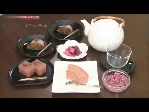 Japan Trip Plan-Cherry Blossom Scenery & Cycling Ehime's Islands on a Rental