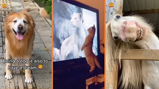 Funny Animals Video | Funny Cats & Dogs Reaction TikTok Compilation  Part 18 #shorts