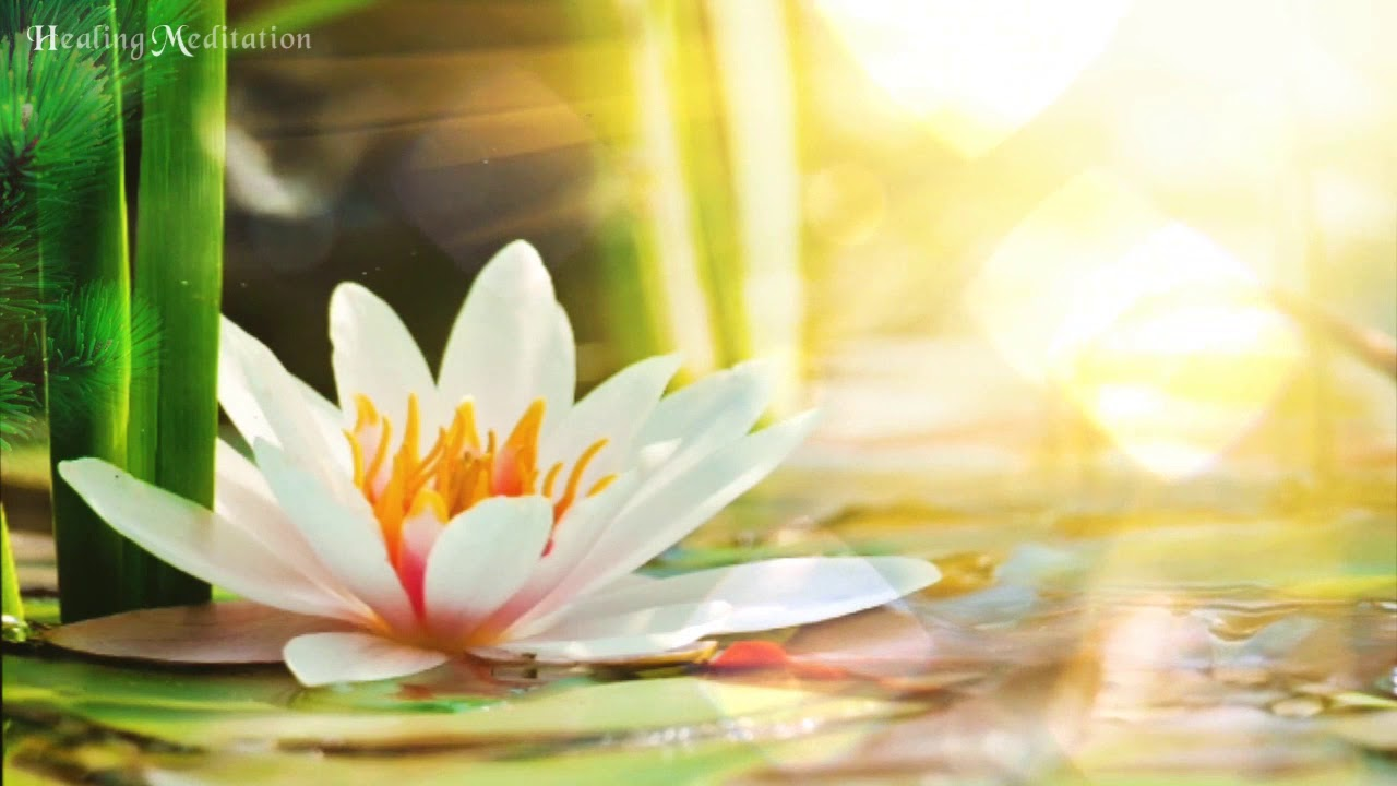 Beautiful SoothingㅣLotus HealingㅣHeals Cells NaturallyㅣHeals & Regnerates 222Hz + 285Hz