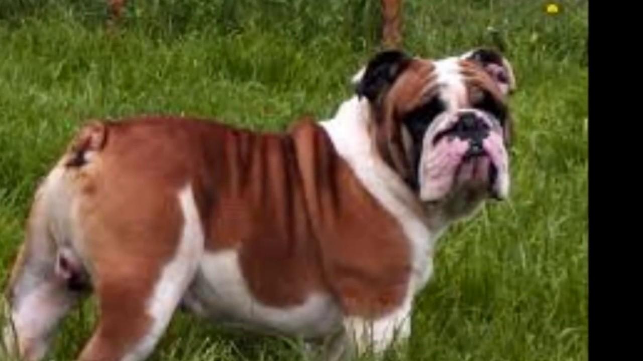 Los 10 mejores perros del mundo en el 2014 youtube for Mejores carnavales del mundo