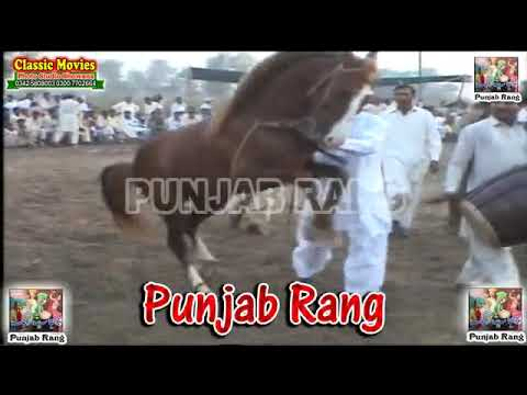 Horse Dance Punjab / Darbar Meran Je Pangomor 2011 / Peer Syed Shah Hussain Qadri-39