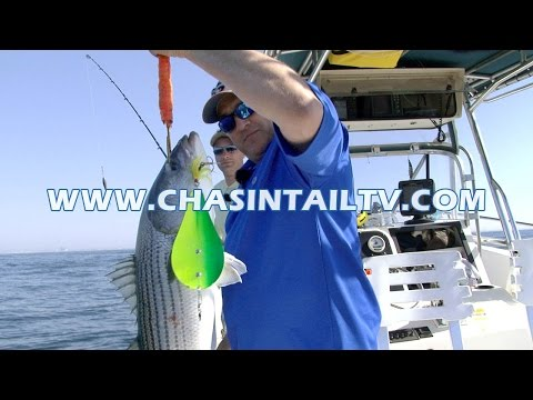 Bunker Spoon Trolling Tactics For Striped Bass   Chasin' Tail TV