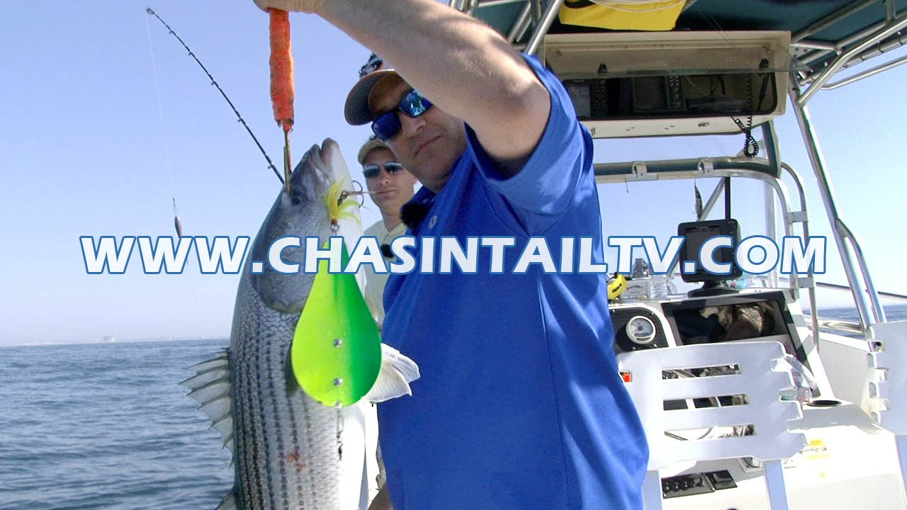 Bunker spoon trolling tactics for striped bass chasin for Chasing tails fishing report