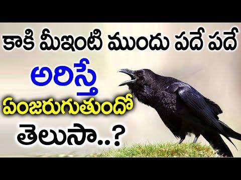 కాకి మీ ఇంటి ముందు పదే పదే అరిస్తే ఏమిజరుగుతుందో తెలుసా? |  Secretes of Crow Sounds