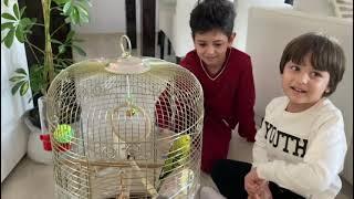 Fatih Selimin Tuğrul abisinin  sevimli muhabbet kuşu kirpik.Konuşan muhabbet kuşu.