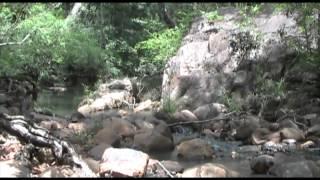 Jungle Survival Folge 5: Leben im Regenwald